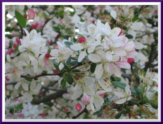 This image has an empty alt attribute; its file name is iblossoms.jpg